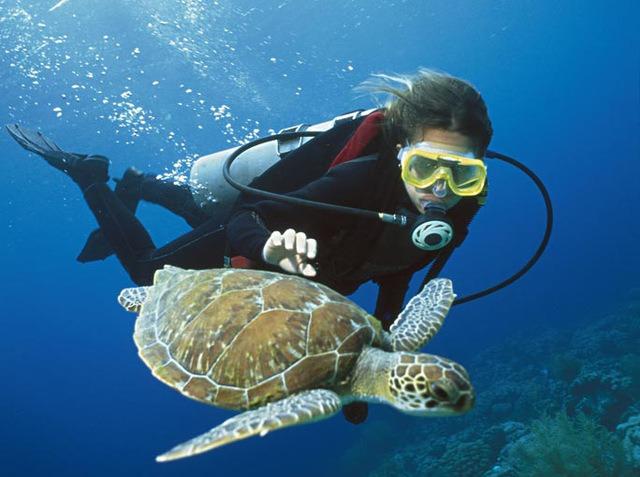 深圳南澳珊瑚潜水、快艇出海、烧烤 一日游