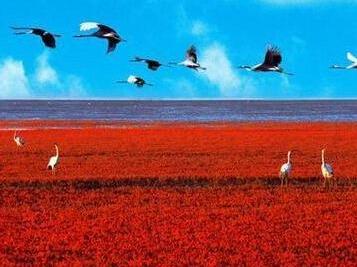 国庆海上明月红海滩
