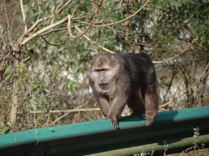 12月15日龙池—邂逅酋猴