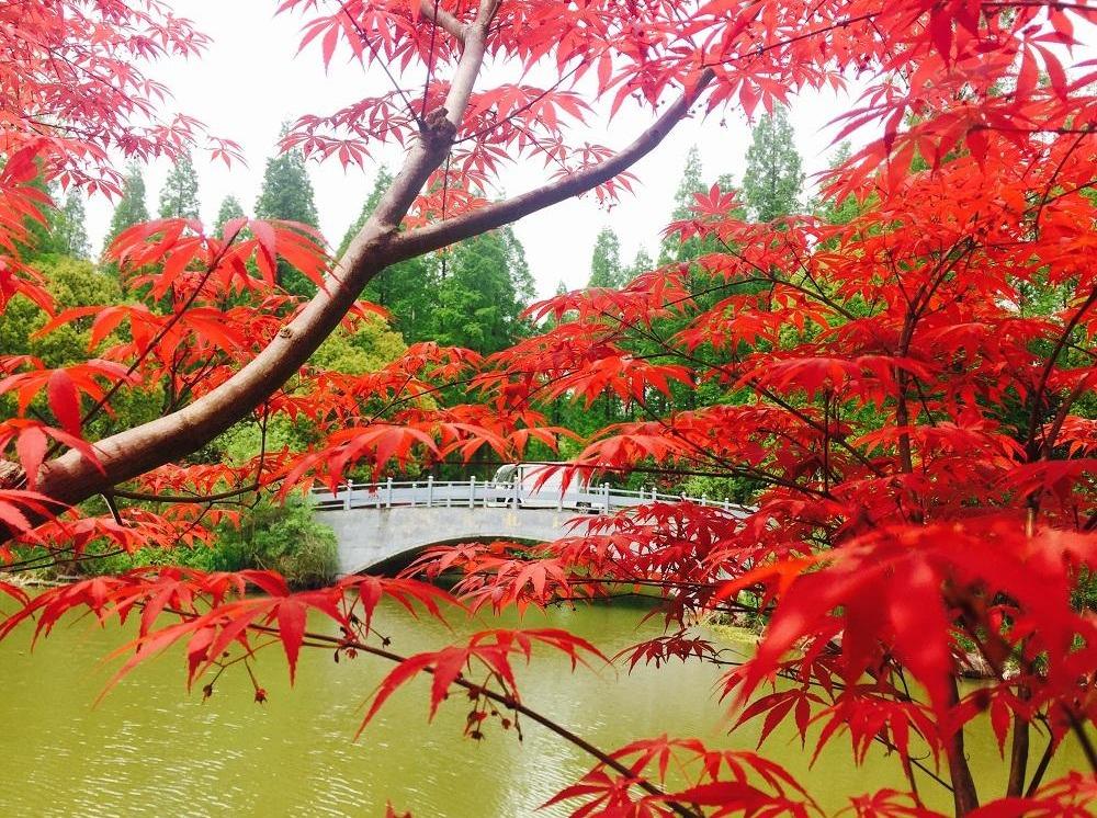 周日 红枫岭 轻徒步红叶摄影1日游
