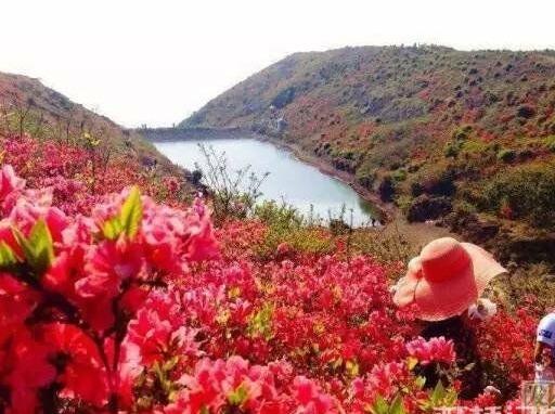 湖雾镇大宝山徒步羊角洞景区赏杜鹃花