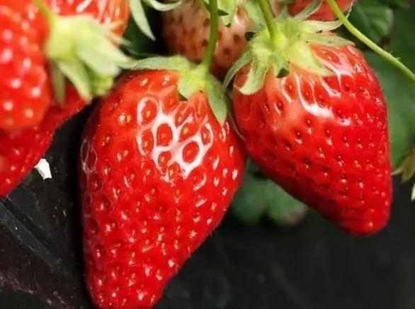 3.9号、10号、野生动物园+草莓采摘