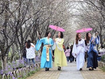 阳澄湖半岛徒步赏樱花骑行
