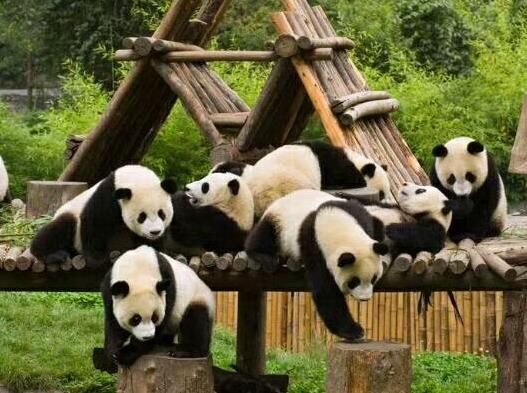 邓生沟秋色彩林,看大熊猫两日游