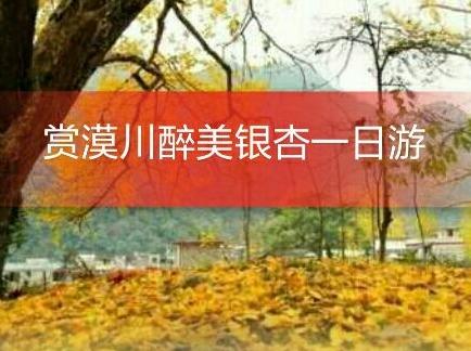 11月17日赏漠川张家崎醉美银杏一日游