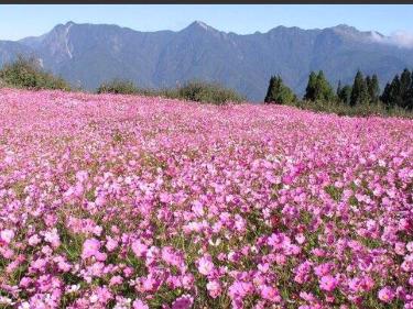 元月13号桂林看花活动