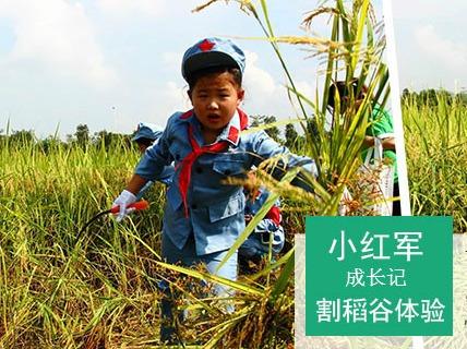 7月29日小红军下乡割稻谷拔花生丛林探秘