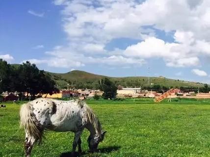 坝上国庆节骑马 烤全羊