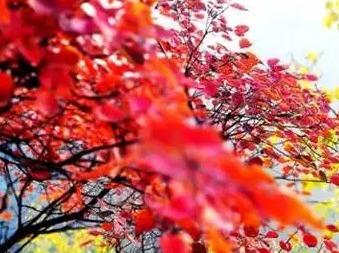 周六一天 坡峰岭红叶节