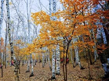 喇叭沟门 赏秋看红叶