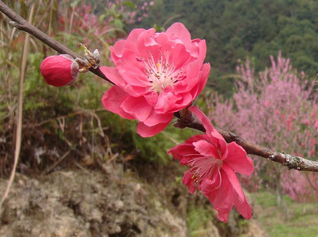 【松鼠户外】美如诗画路过桃花谷